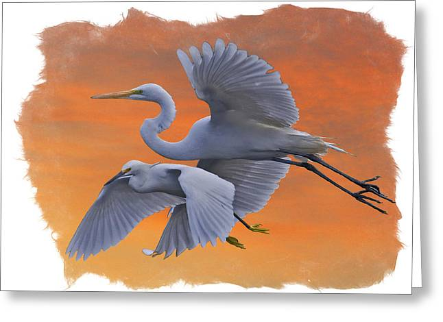 Great Egret Greeting Cards - EGRETS GREAT and SNOWY Greeting Card by Larry Linton