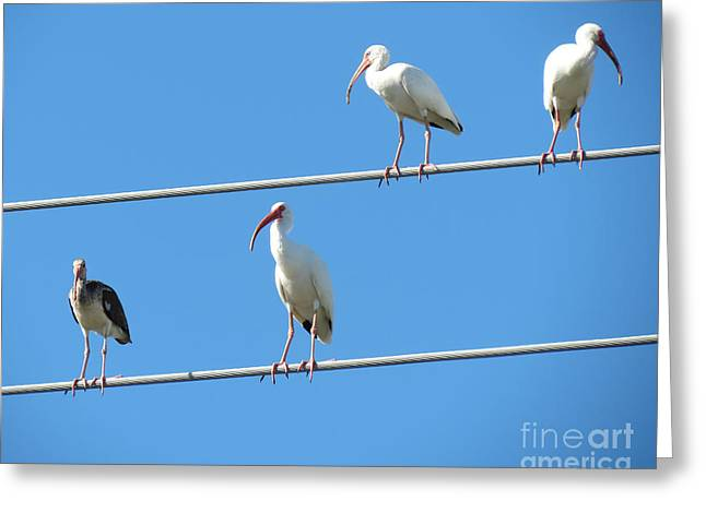 Bird On Tree Greeting Cards - Egrets On A Wire II Greeting Card by Chris Andruskiewicz