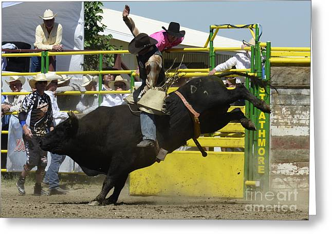 Bull Riding Greeting Cards - Rodeo Eight Seconds Greeting Card by Bob Christopher