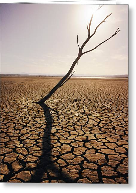 Mud Season Photographs Greeting Cards - El Mirage Snag Greeting Card by Larry Dale Gordon - Printscapes