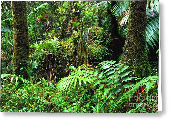 Puerto Rico Greeting Cards - El Yunque Lush Vegetation Greeting Card by Thomas R Fletcher