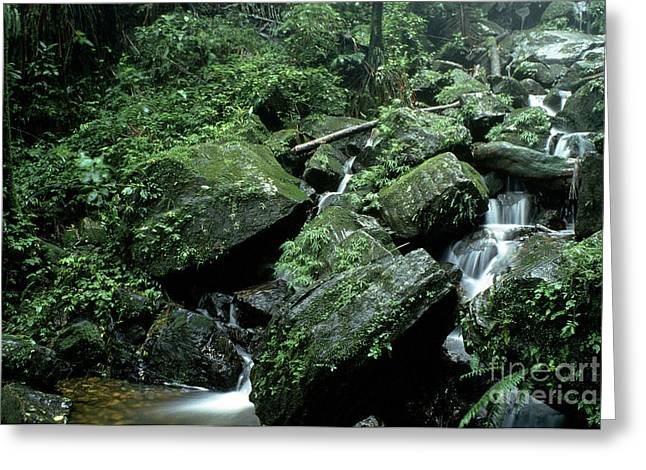 Puerto Rico Greeting Cards - El Yunque National Forest Rocks and Waterfall Greeting Card by Thomas R Fletcher