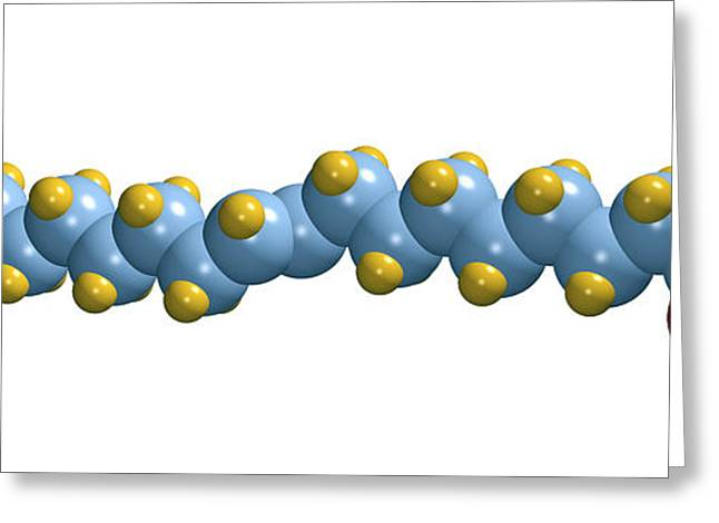 Chemical Compound Greeting Cards - Elaidic Acid, Computer Model Greeting Card by Dr Mark J. Winter