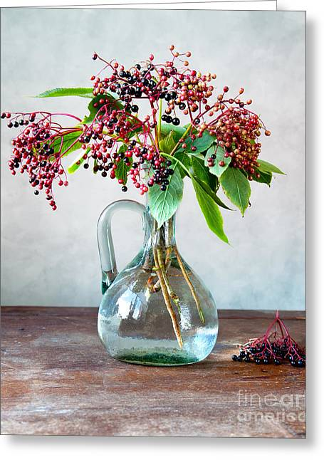 Elderberries 06 Greeting Card by Nailia Schwarz