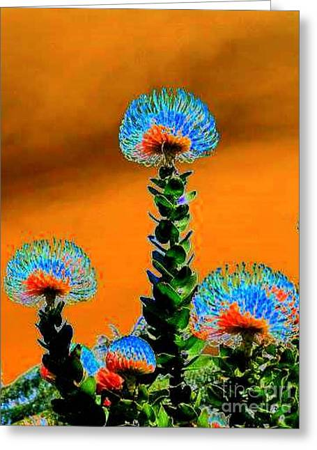 Pin Cushion Flower Greeting Cards - Electric Sunset in My Imaginary Garden Greeting Card by Angela L Walker