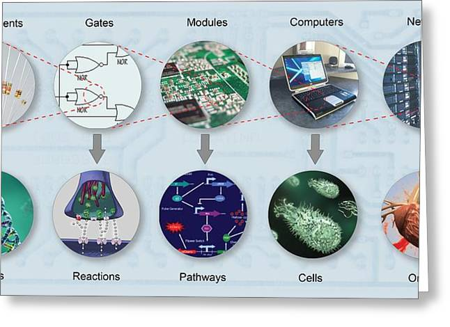 Component Greeting Cards - Electronic And Biologic Systems, Artwork Greeting Card by Equinox Graphics