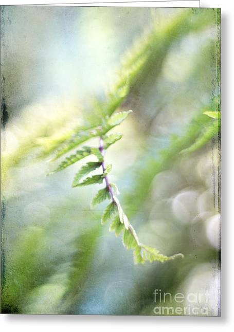 Photo Effects Greeting Cards - Elegant Fern Greeting Card by Darren Fisher