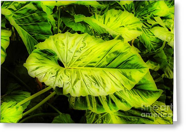 Elephant Ear Plant Greeting Cards - Elephant Ears Greeting Card by Cheryl Young