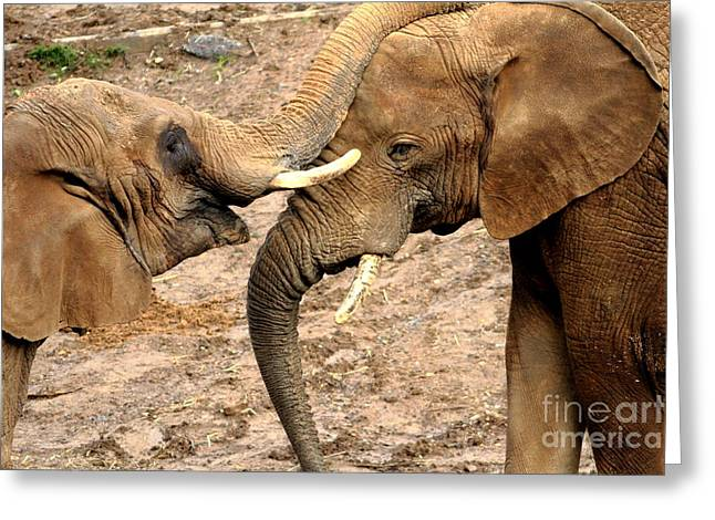 Elephants Eye Greeting Cards - Elephant Foreplay Greeting Card by Wingsdomain Art and Photography