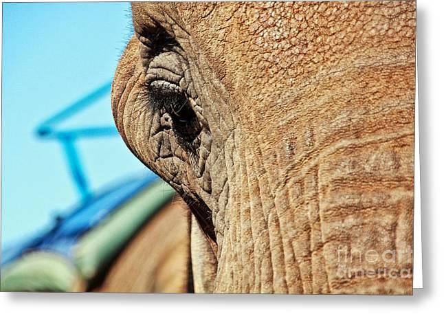 Jill Hyland Greeting Cards - Elephant Greeting Card by Jill Hyland