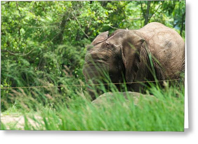 Elephant Greeting Card by Kayla Yankovic