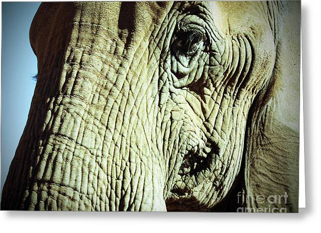 Love The Animal Greeting Cards - Elephant Greeting Card by Kelly Holm