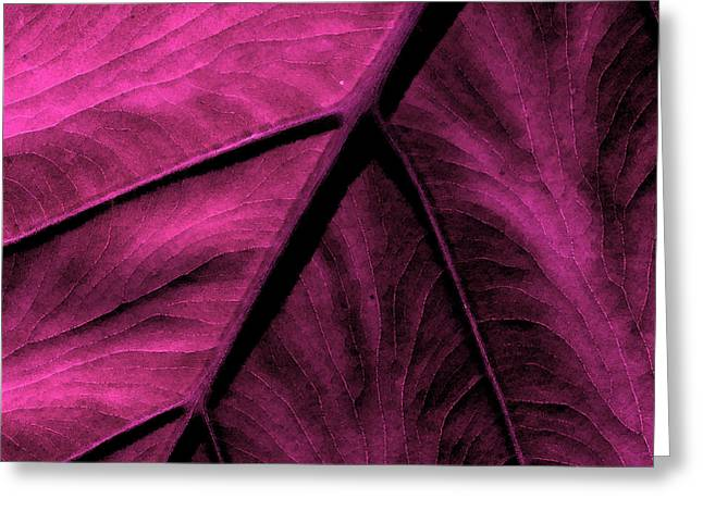 Colorful Photos Mixed Media Greeting Cards - Elephant Leaf Abstract Greeting Card by Bonnie Bruno
