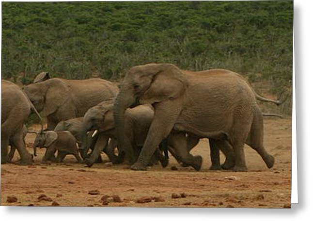 Addo Greeting Cards - Elephant Parade Greeting Card by Bruce J Robinson