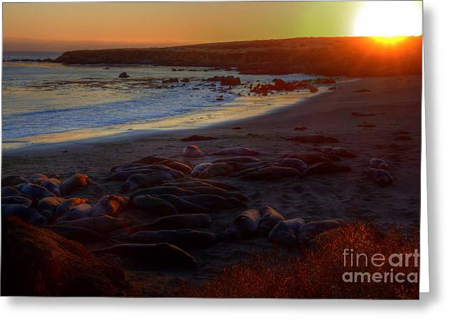 Elephant Seals Greeting Cards - Elephant Rocks Greeting Card by James Anderson