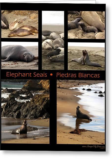 Best Sellers -  - Elephant Seals Greeting Cards - Elephant Seals Collage - California Greeting Card by Jessica Westermeyer