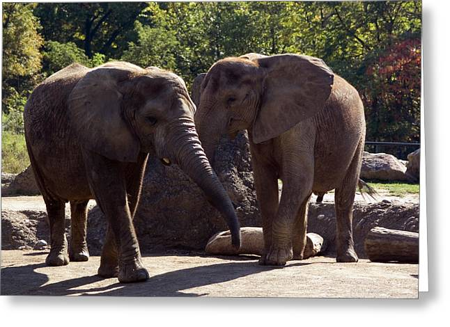Pittsburgh Zoo Greeting Cards - Elephants At The Pittsburgh Zoo Greeting Card by Stacy Gold