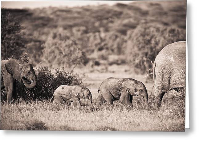 The Followers Photographs Greeting Cards - Elephants Walking In A Row Samburu Kenya Greeting Card by David DuChemin