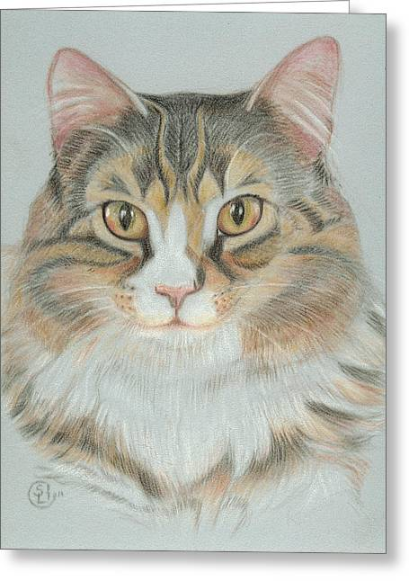 Eli Greeting Card by Stephanie L Carr