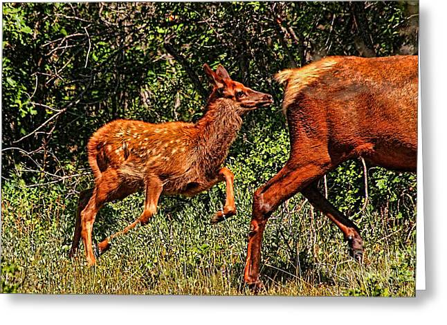 Sante Fe Trail Greeting Cards - Elk Fawn Greeting Card by Tommy Anderson