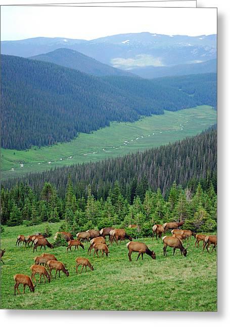 Elk Highlands Greeting Card by Robert Meyers-Lussier