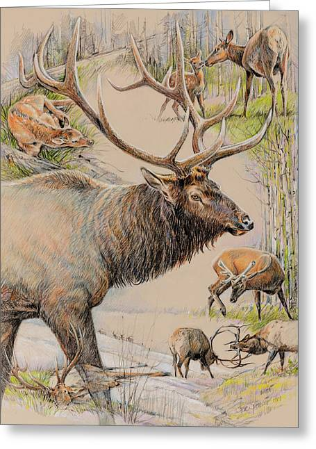 Season Pastels Greeting Cards - Elk Lifescape Greeting Card by Steve Spencer