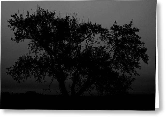Edmonton Photographer Greeting Cards - Elm in Me Greeting Card by Jerry Cordeiro