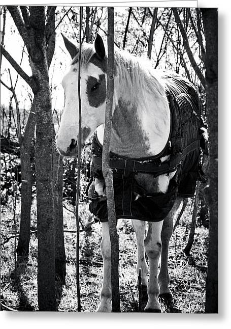 Horse Images Greeting Cards - Elusive Greeting Card by Toni Hopper