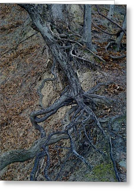 Tree Roots Mixed Media Greeting Cards - Embossed Roots Greeting Card by Rachel Blomberg