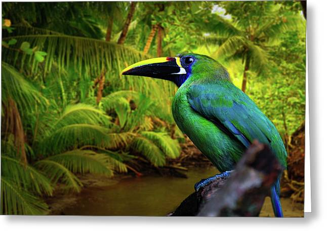 Toucan Print Greeting Cards - Emerald and Blue Toucan  Greeting Card by Harry Spitz