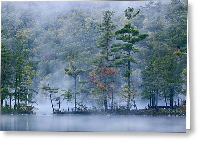 Animals and Earth - Greeting Cards - Emerald Lake In Fog Emerald Lake State Greeting Card by Tim Fitzharris