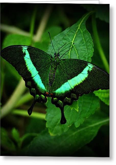 Sandy Keeton Greeting Cards - Emerald Swallowtail Greeting Card by Sandy Keeton