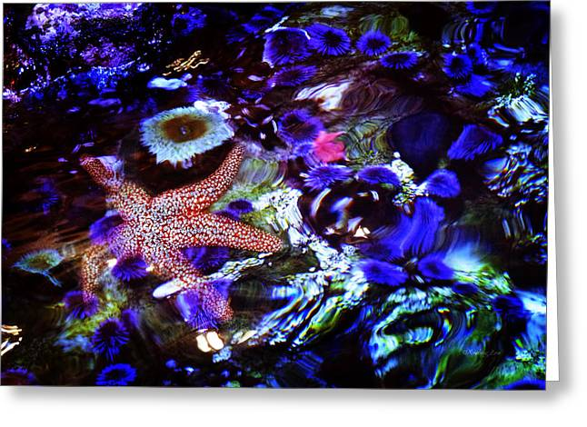 Decorative Fish Greeting Cards - Emerged Starfish Greeting Card by Xueling Zou