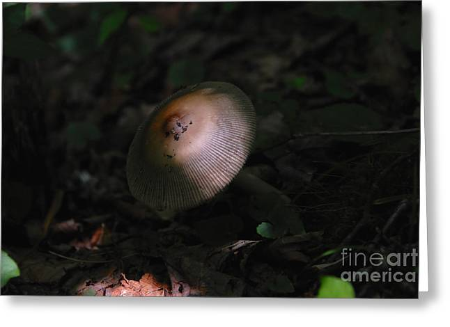 Forest Floor Greeting Cards - Emergence Greeting Card by David Lee Thompson