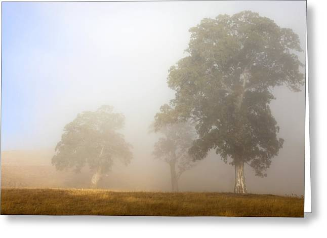 Gum-tree Greeting Cards - Emerging from the Fog Greeting Card by Mike  Dawson