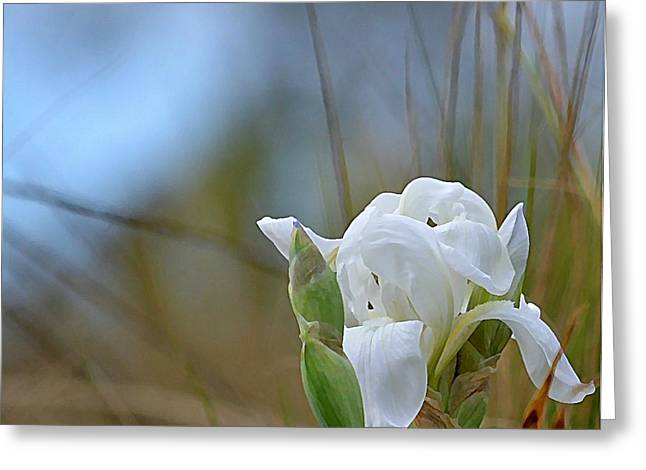 Iris Digital Art Greeting Cards - Emerging Iris Greeting Card by Fraida Gutovich