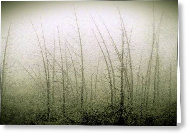 Emerson Bog at Dawn Greeting Card by Mike Greco