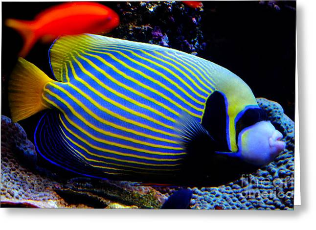 Emperor Angelfish Greeting Card by Pravine Chester