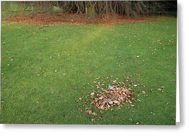 Transient Greeting Cards - Empty lawn with a little heap of leaves scraped together Greeting Card by Matthias Hauser