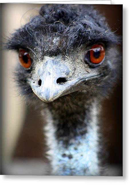 """animal Photographs"" Greeting Cards - Emu at Melbourne Zoo Greeting Card by Tam Graff"