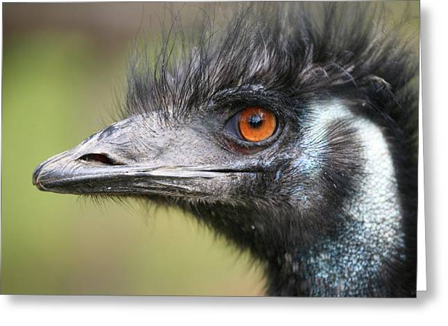 Emu Greeting Card by Karol Livote