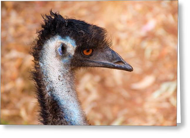 Emu Greeting Cards - Emu Profile Greeting Card by Mike  Dawson