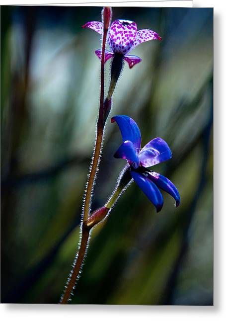 Enamel Orchid Greeting Card by Heather Thorning