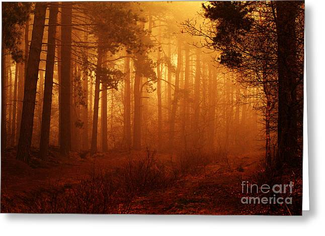 Clare Scott Greeting Cards - Enchanted Forest Greeting Card by Clare Scott