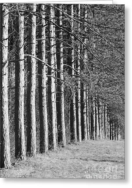 Black Moore Greeting Cards - Enchanted Forest Greeting Card by Luke Moore