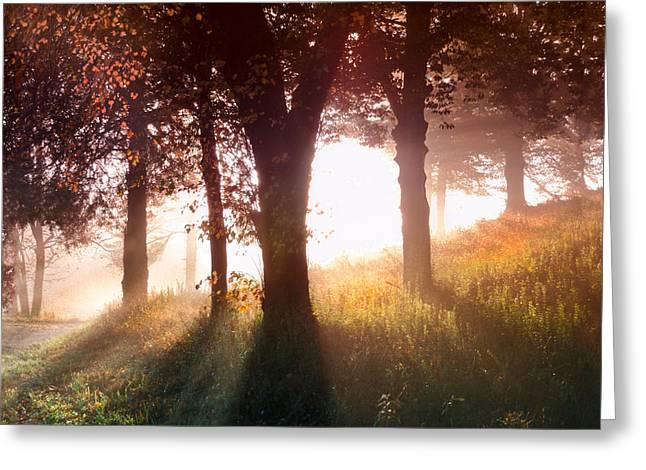 Enchanted Meadow Greeting Card by Debra and Dave Vanderlaan