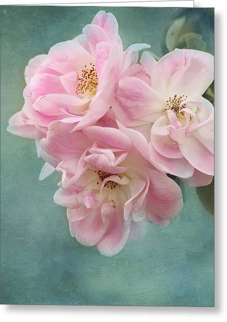 Close Focus Floral Greeting Cards - Enchanted Pink Rose Greeting Card by Kim Hojnacki