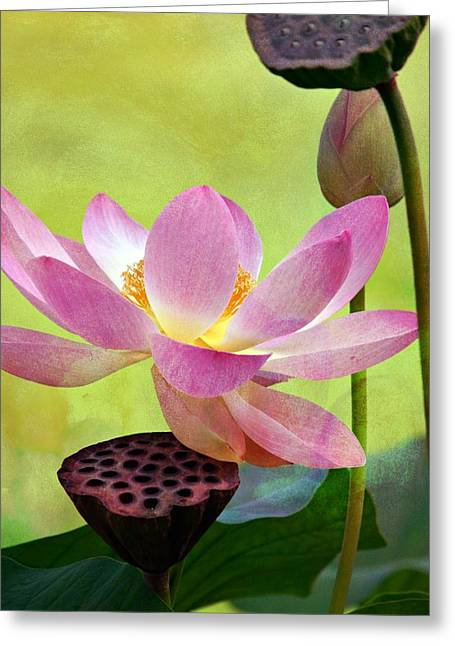 Pink Lotus Greeting Cards - Enchantment Greeting Card by Fraida Gutovich