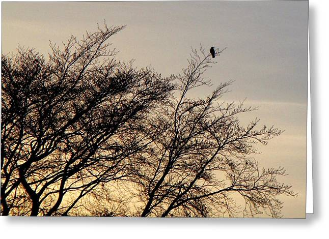 Roberto Alamino Greeting Cards - End of Day Greeting Card by Roberto Alamino