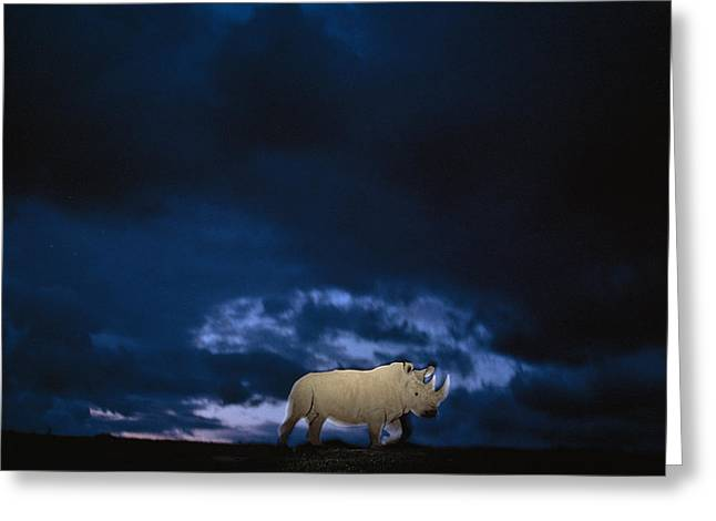 Full-length Portrait Photographs Greeting Cards - Endangered Northern White Rhinoceros Greeting Card by Michael Nichols